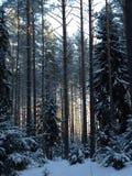 Floresta no inverno Imagem de Stock Royalty Free