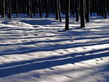 Floresta no inverno. Foto de Stock