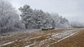 Floresta no inverno Imagem de Stock