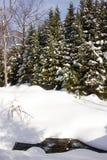 Floresta no inverno fotos de stock