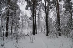 Floresta no inverno com neve Fotografia de Stock Royalty Free