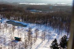 Floresta no inverno da neve fotografia de stock