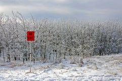 Floresta no inverno e no sinal Fotos de Stock Royalty Free