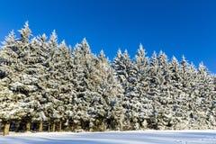 Floresta no inverno em Sunny Day Fotografia de Stock Royalty Free