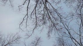 Floresta no inverno Muita neve No primeiro plano são as copas de árvore com ninhos do pássaro, árvores sem folha vídeos de arquivo