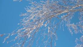 Floresta no inverno Muita neve No primeiro plano são as partes superiores das árvores na geada, árvores sem folha vídeos de arquivo
