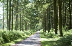 Floresta no Limousin Foto de Stock Royalty Free