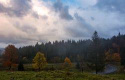 Floresta no montanhês no clima de tempestade Fotos de Stock