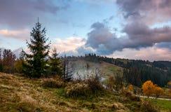 Floresta no montanhês no clima de tempestade Fotografia de Stock Royalty Free