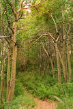 Floresta no nacional Forest Park de Inyo Foto de Stock Royalty Free