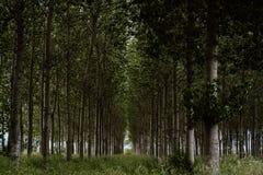Floresta no norte da Espanha fotos de stock royalty free