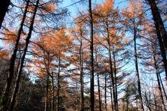 Floresta no outono Fotos de Stock