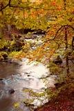 Floresta no outono fotografia de stock royalty free