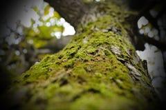 Floresta no outono Foto de Stock Royalty Free