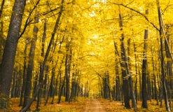 Floresta no outono