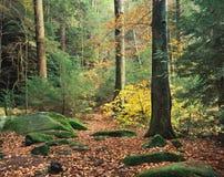 Floresta no outono imagens de stock royalty free