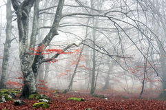 Floresta no outono com névoa imagens de stock royalty free
