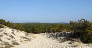 Floresta no país France de landes Fotografia de Stock