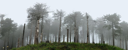 Floresta no panorama 2 da névoa Foto de Stock Royalty Free