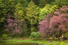 Floresta no parque pelo lago Imagens de Stock