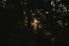 Floresta no por do sol foto de stock
