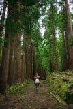 Floresta no Sao Miguel, A?ores, Portugal ?rvores altas foto de stock