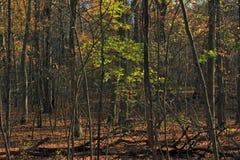 Floresta no segmento de Monches da fuga da idade de gelo Fotos de Stock Royalty Free
