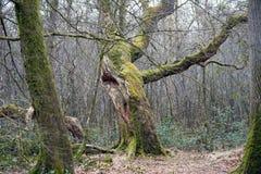 Floresta no sul jutland imagem de stock royalty free