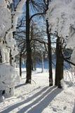 Floresta no tempo de inverno Fotografia de Stock