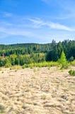 Floresta no tempo de mola Imagem de Stock
