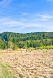Floresta no tempo de mola. Paisagem da natureza Fotografia de Stock Royalty Free