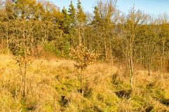 A floresta no thuringia de Watzdorf Imagem de Stock Royalty Free