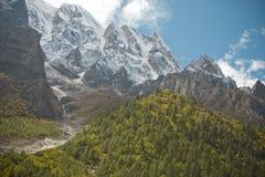 Floresta no vale das montanhas Foto de Stock