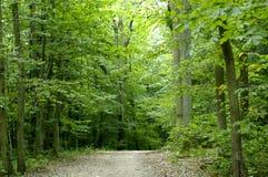 Floresta no verão Imagens de Stock