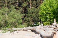 Floresta no verão Foto de Stock Royalty Free