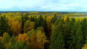 Floresta no zangão brilhante do helicóptero da opinião do ar da cor vermelha de amarelo alaranjado da estação do outono filme