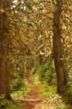 Floresta noroeste pacífica fotografia de stock royalty free