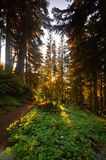 Floresta noroeste pacífica Imagens de Stock