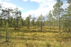 Floresta norueguesa Imagem de Stock