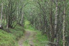Floresta norueguesa Fotos de Stock Royalty Free