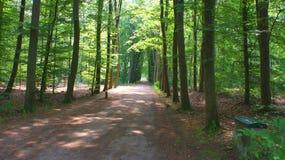 Floresta nos Países Baixos Fotos de Stock