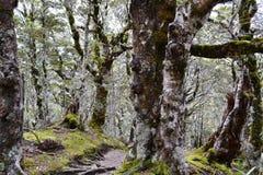 Floresta nova de Zealandian fotografia de stock