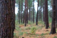 Floresta nova no outono imagem de stock