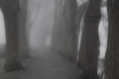 Floresta obscura Imagem de Stock Royalty Free