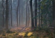 Floresta obscura no inverno Imagem de Stock