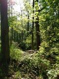 Floresta ocidental de Michigan Fotografia de Stock