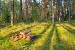 Floresta oniferous do ¡ de Ð Imagem de Stock