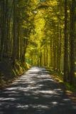 Floresta ou beechwood enevoado da árvore Parque nacional de Foreste Casentinesi, Toscânia, Itália fotografia de stock royalty free