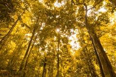 Floresta ou montanha na ilha de Mentawai Foto de Stock