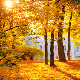Floresta ou parque do outono Fotos de Stock Royalty Free
